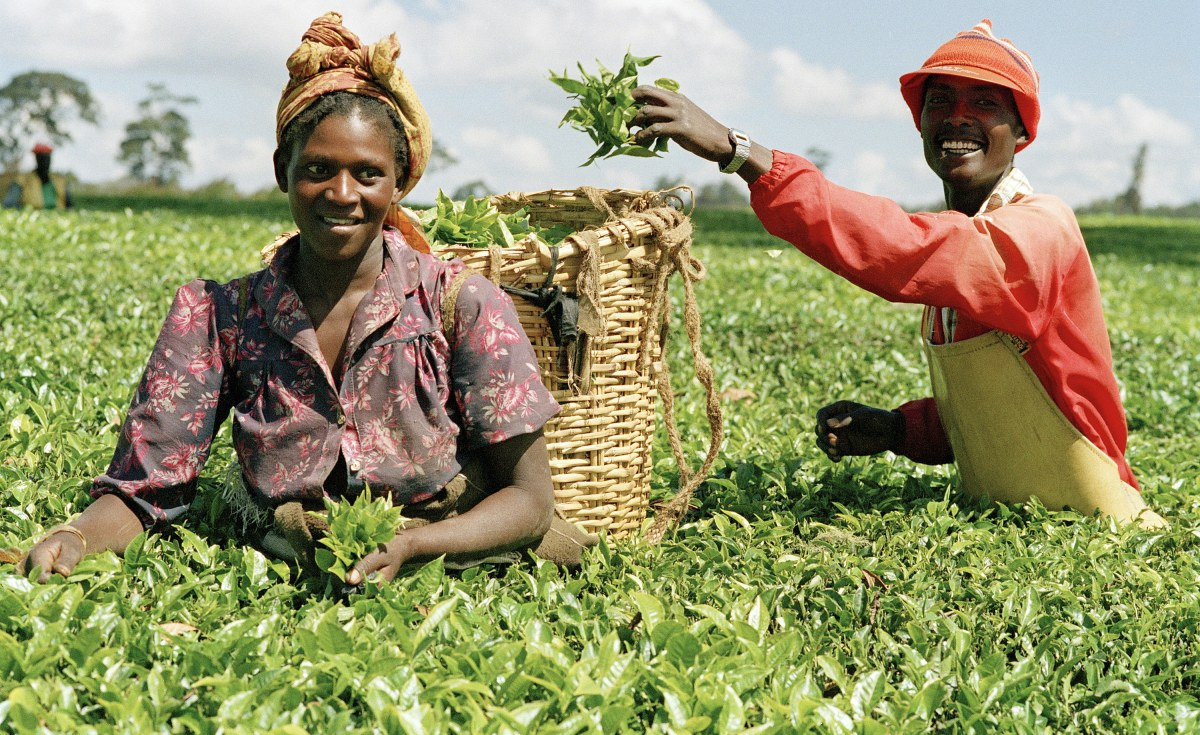 agriculture and opportunity