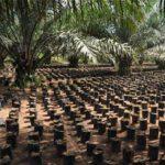 Agricultural seedlings