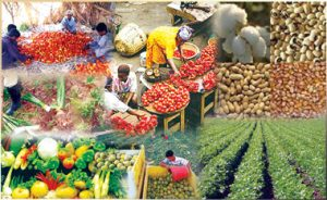 Agricultural Business in Nigeria.